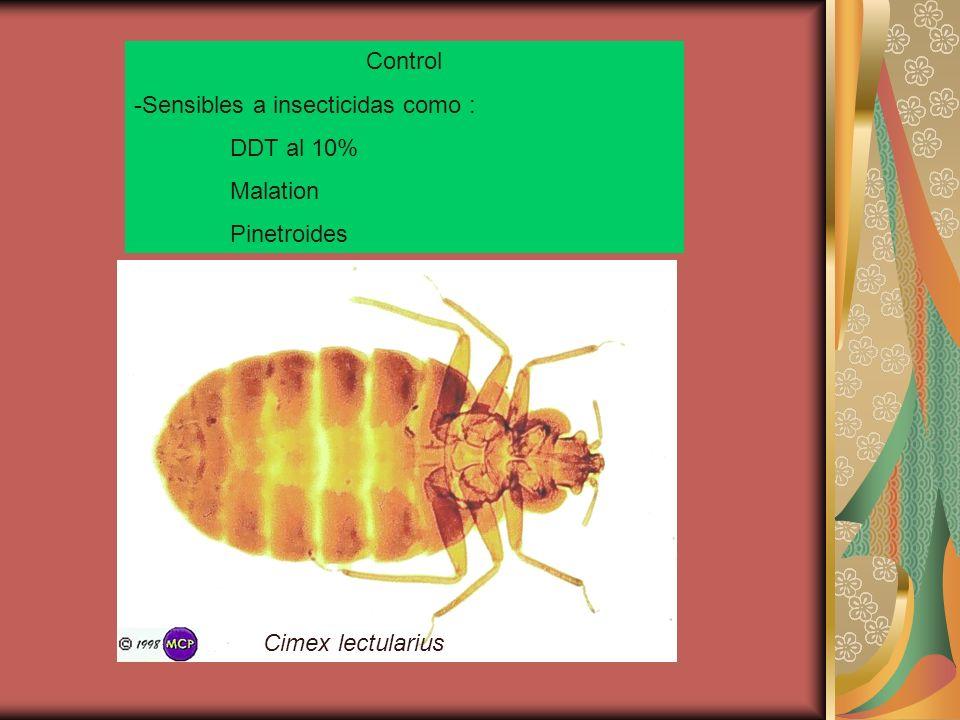 Control -Sensibles a insecticidas como : DDT al 10% Malation Pinetroides Cimex lectularius