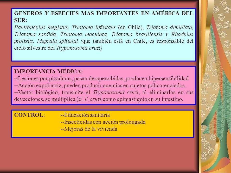 GENEROS Y ESPECIES MAS IMPORTANTES EN AMÉRICA DEL SUR: Pantrongylus megistus, Triatoma infestans (en Chile), Triatoma dimidiata, Triatoma sordida, Triatoma maculata, Triatoma brasiliensis y Rhodnius prolixus, Mepraia spinolai (que también está en Chile, es responsable del ciclo silvestre del Trypanosoma cruzi) IMPORTANCIA MÉDICA: --Lesiones por picaduras, pasan desapercibidas, producen hipersensibilidad --Acción expoliatriz, pueden producir anemias en sujetos policarenciados.