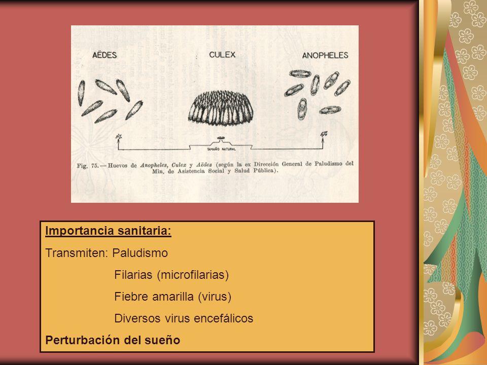 Importancia sanitaria: Transmiten: Paludismo Filarias (microfilarias) Fiebre amarilla (virus) Diversos virus encefálicos Perturbación del sueño