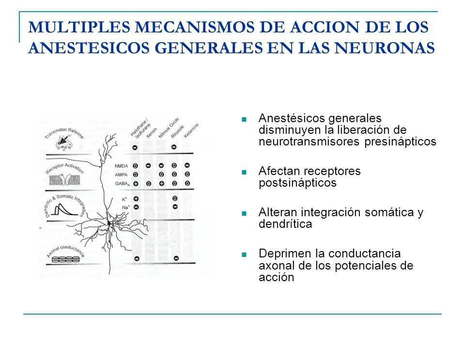 MULTIPLES MECANISMOS DE ACCION DE LOS ANESTESICOS GENERALES EN LAS NEURONAS Anestésicos generales disminuyen la liberación de neurotransmisores presin
