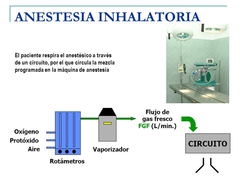 ANESTESIA INHALATORIA El paciente respira el anestésico a través de un circuito, por el que circula la mezcla programada en la máquina de anestesia