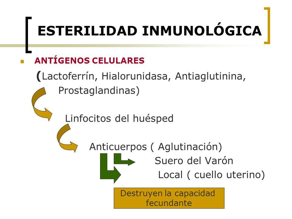 ESTERILIDAD INMUNOLÓGICA ANTÍGENOS CELULARES ( Lactoferrín, Hialorunidasa, Antiaglutinina, Prostaglandinas) Linfocitos del huésped Anticuerpos ( Aglut