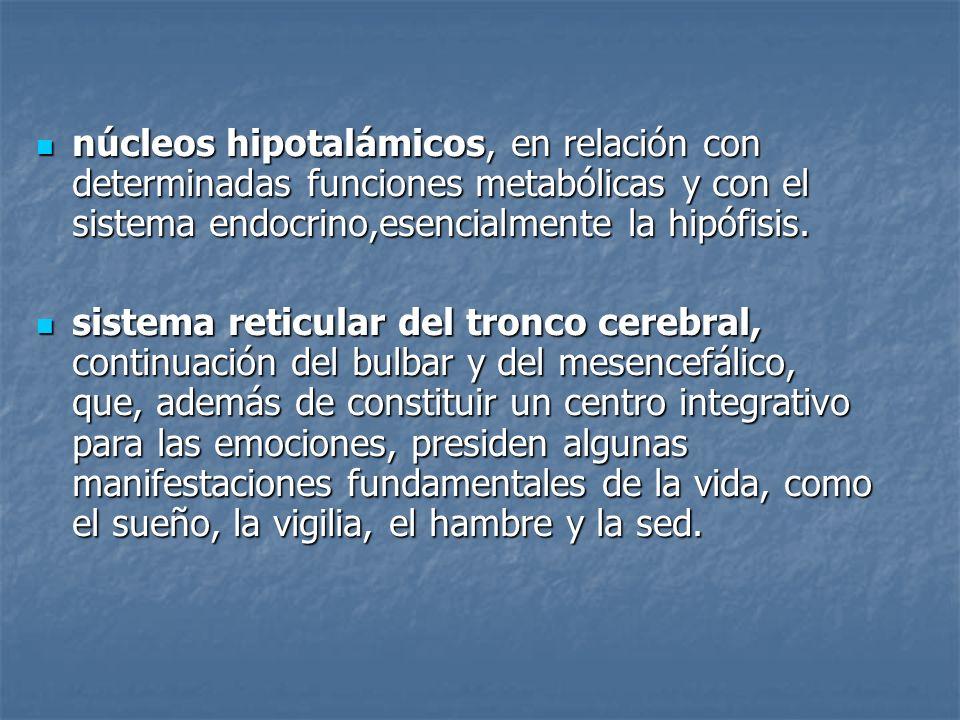 núcleos hipotalámicos, en relación con determinadas funciones metabólicas y con el sistema endocrino,esencialmente la hipófisis. núcleos hipotalámicos