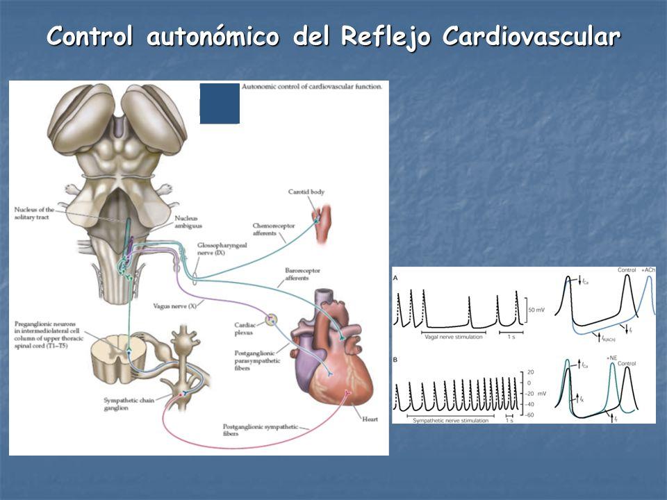 Control autonómico del Reflejo Cardiovascular
