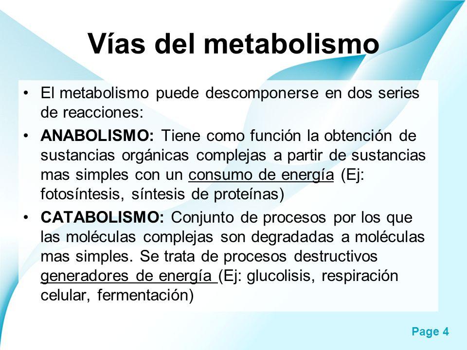 Page 4 Vías del metabolismo El metabolismo puede descomponerse en dos series de reacciones: ANABOLISMO: Tiene como función la obtención de sustancias
