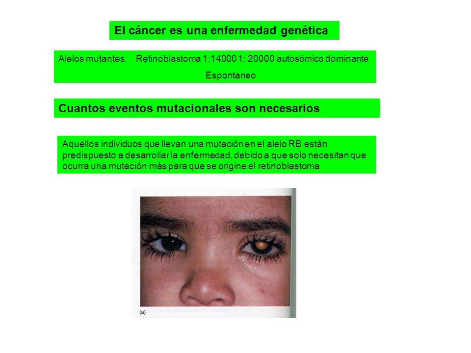 El cáncer es una enfermedad genética Alelos mutantes.