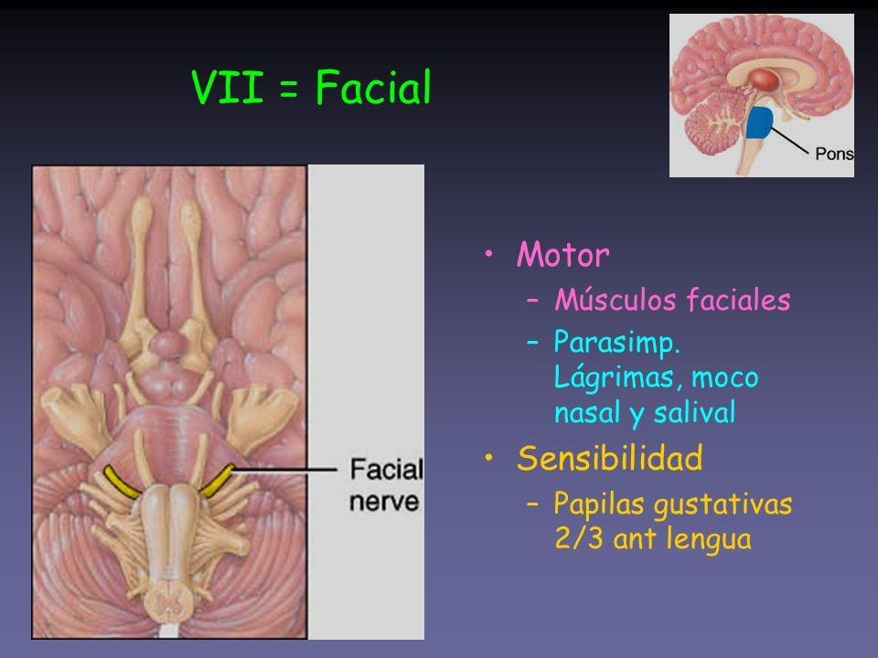 VII = Facial Motor –Músculos faciales –Parasimp. Lágrimas, moco nasal y salival Sensibilidad –Papilas gustativas 2/3 ant lengua
