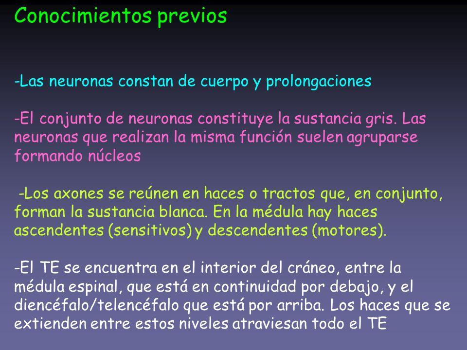 Conocimientos previos -Las neuronas constan de cuerpo y prolongaciones -El conjunto de neuronas constituye la sustancia gris. Las neuronas que realiza