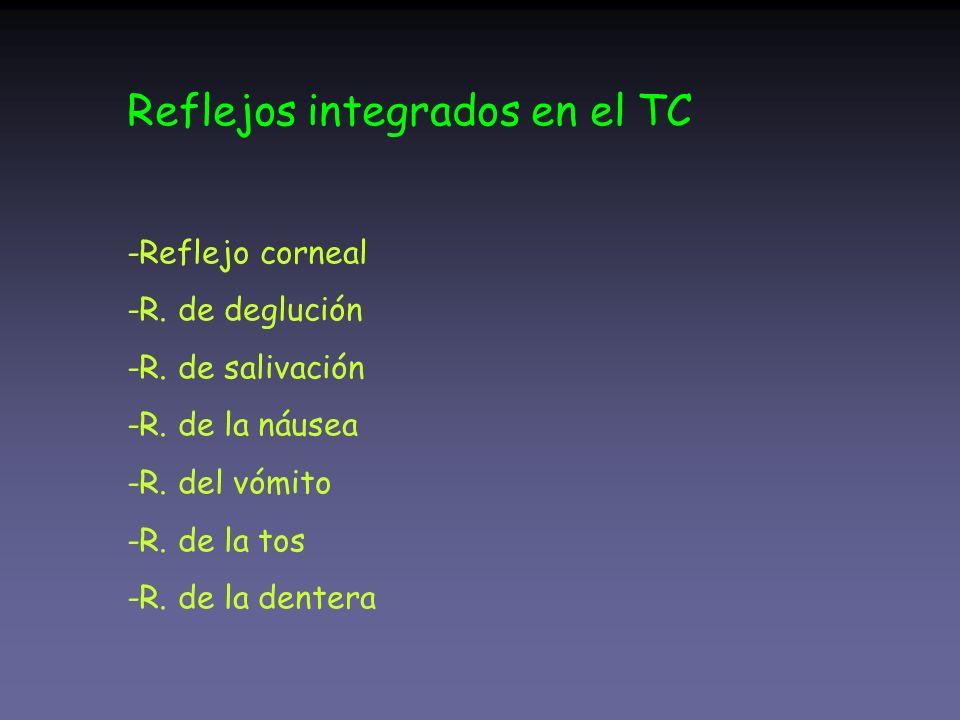 Reflejos integrados en el TC -Reflejo corneal -R. de deglución -R. de salivación -R. de la náusea -R. del vómito -R. de la tos -R. de la dentera