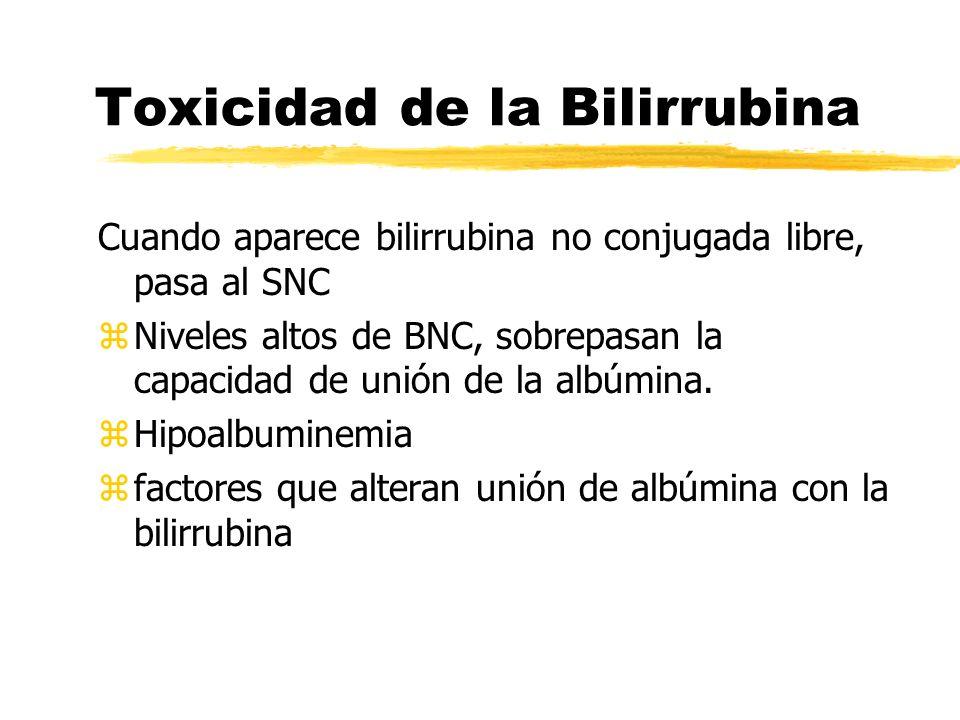 Toxicidad de la Bilirrubina Cuando aparece bilirrubina no conjugada libre, pasa al SNC z Niveles altos de BNC, sobrepasan la capacidad de unión de la