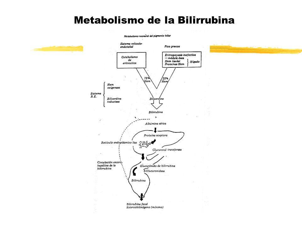 Toxicidad de la Bilirrubina Encefalopatía Bilirrubínica: z Observada y descrita en enfermedad hemolítica por incompatibilidad RH z Cifras altas ( 20 a 30 mg) z Se describe etapa aguda y crónica ( secuelas graves e invalidantes)