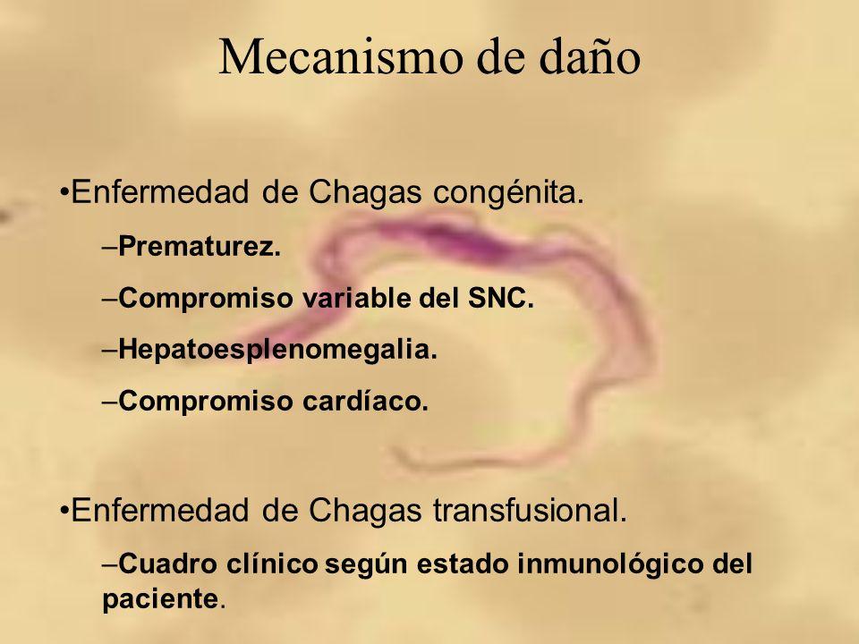 Mecanismo de daño Enfermedad de Chagas congénita. –Prematurez. –Compromiso variable del SNC. –Hepatoesplenomegalia. –Compromiso cardíaco. Enfermedad d