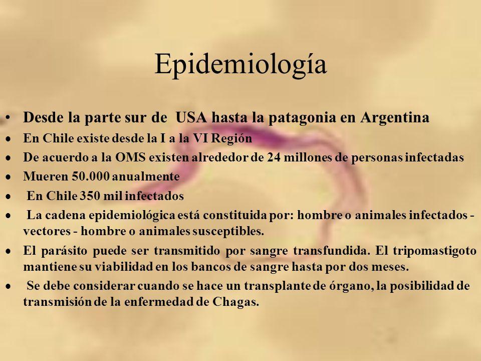 Epidemiología Desde la parte sur de USA hasta la patagonia en Argentina En Chile existe desde la I a la VI Región De acuerdo a la OMS existen alrededo