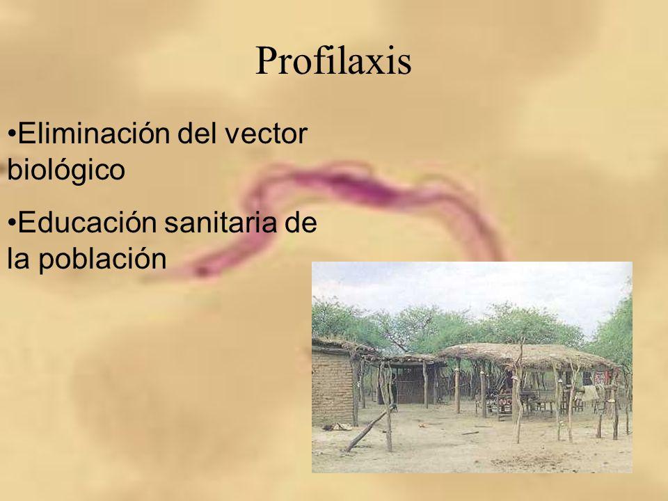 Profilaxis Eliminación del vector biológico Educación sanitaria de la población