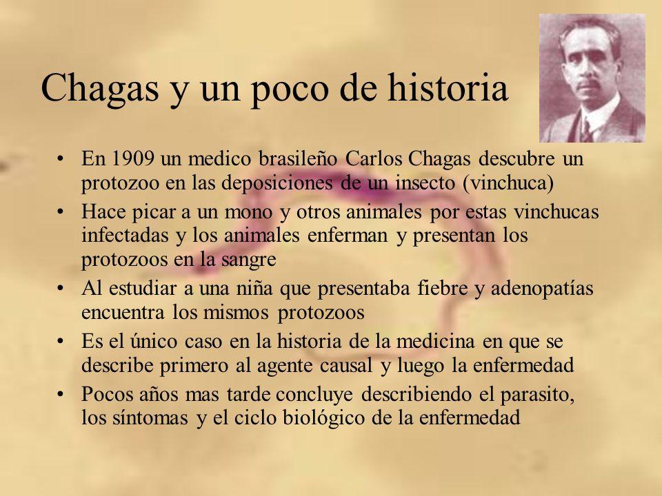 Chagas y un poco de historia En 1909 un medico brasileño Carlos Chagas descubre un protozoo en las deposiciones de un insecto (vinchuca) Hace picar a