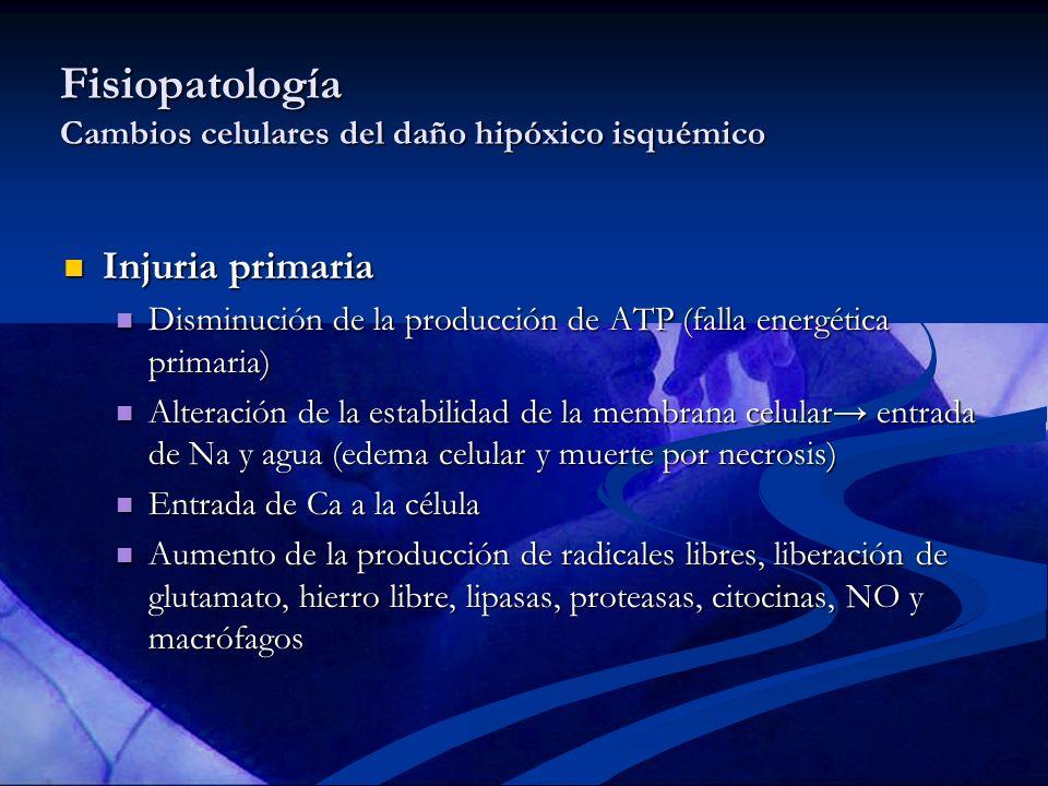 Fisiopatología Cambios celulares del daño hipóxico isquémico Fase latente (ventana terapéutica hasta 6 hrs) Fase latente (ventana terapéutica hasta 6 hrs) Reperfusión Reperfusión Resolución transitoria del edema y recuperación parcial del metabolismo oxidativo Resolución transitoria del edema y recuperación parcial del metabolismo oxidativo Injuria secundaria Injuria secundaria Disfunción mitocondrial (falla energética secundaria) Disfunción mitocondrial (falla energética secundaria) Muerte celular por apoptosis Muerte celular por apoptosis