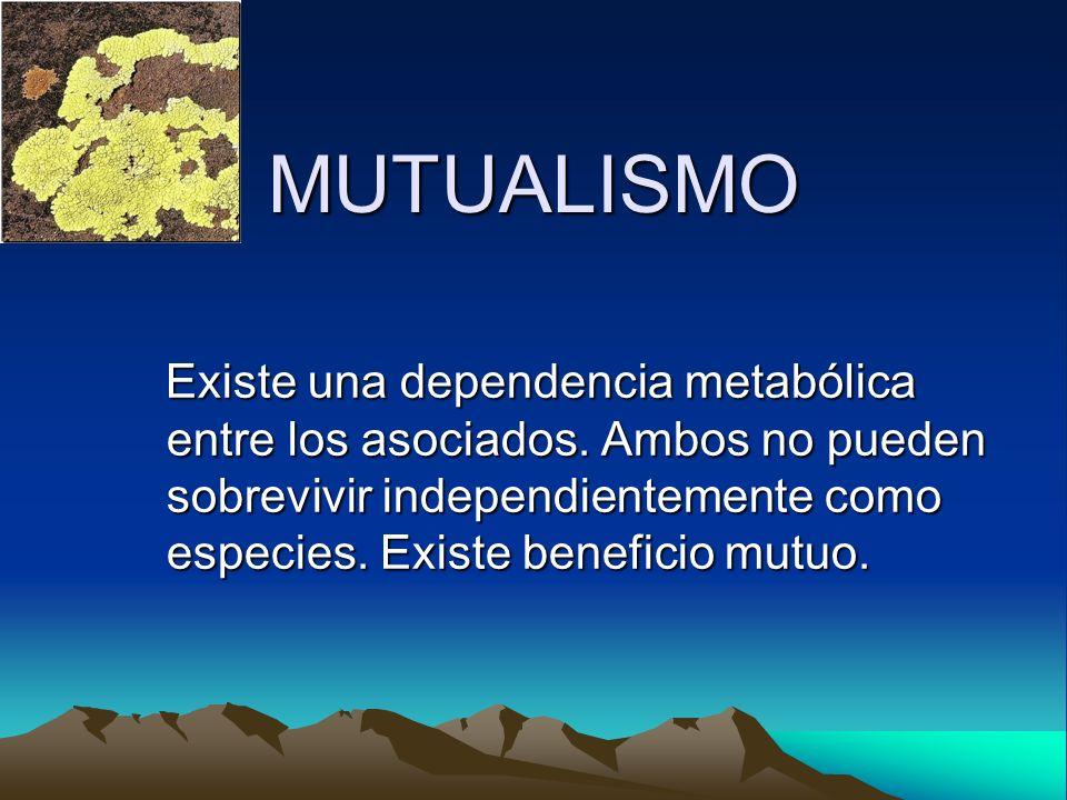 MUTUALISMO Existe una dependencia metabólica entre los asociados. Ambos no pueden sobrevivir independientemente como especies. Existe beneficio mutuo.