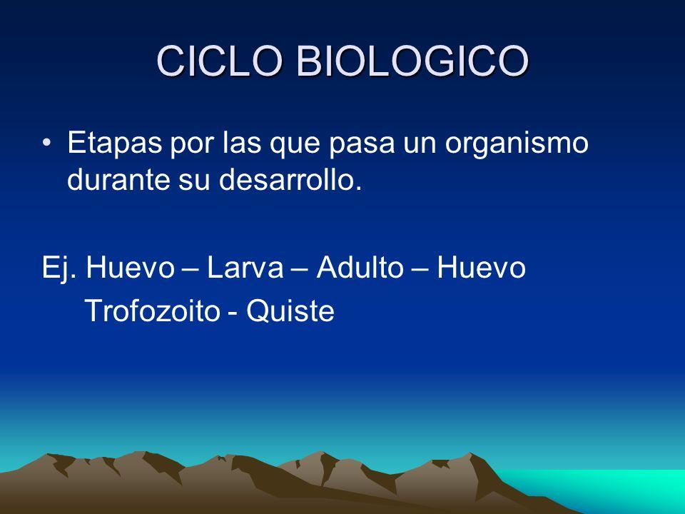 CICLO BIOLOGICO Etapas por las que pasa un organismo durante su desarrollo. Ej. Huevo – Larva – Adulto – Huevo Trofozoito - Quiste
