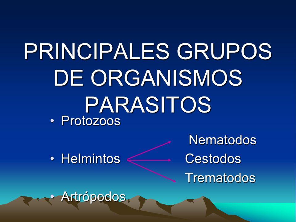 PRINCIPALES GRUPOS DE ORGANISMOS PARASITOS ProtozoosProtozoos Nematodos Nematodos Helmintos CestodosHelmintos Cestodos Trematodos Trematodos Artrópodo