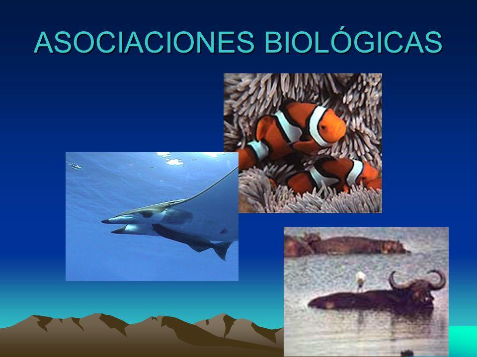 CICLO BIOLOGICO DIRECTO Protozoo: Entamoeba histolytica