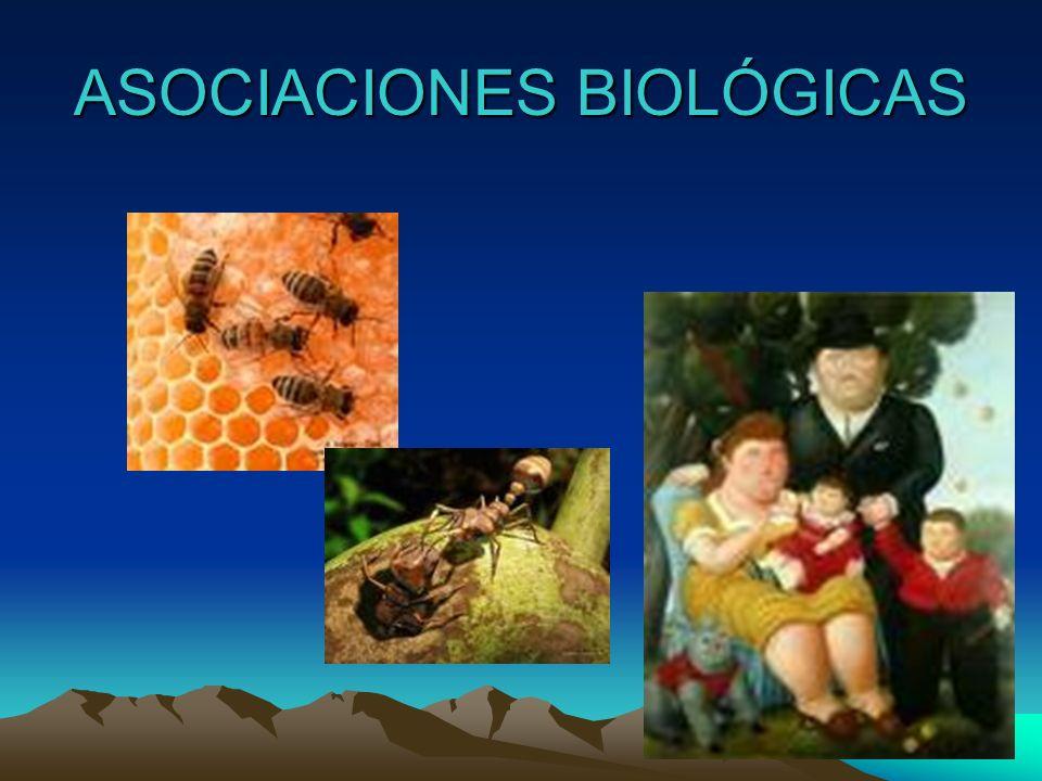 CICLO BIOLOGICO INDIRECTO Cestodo: Taenia solium