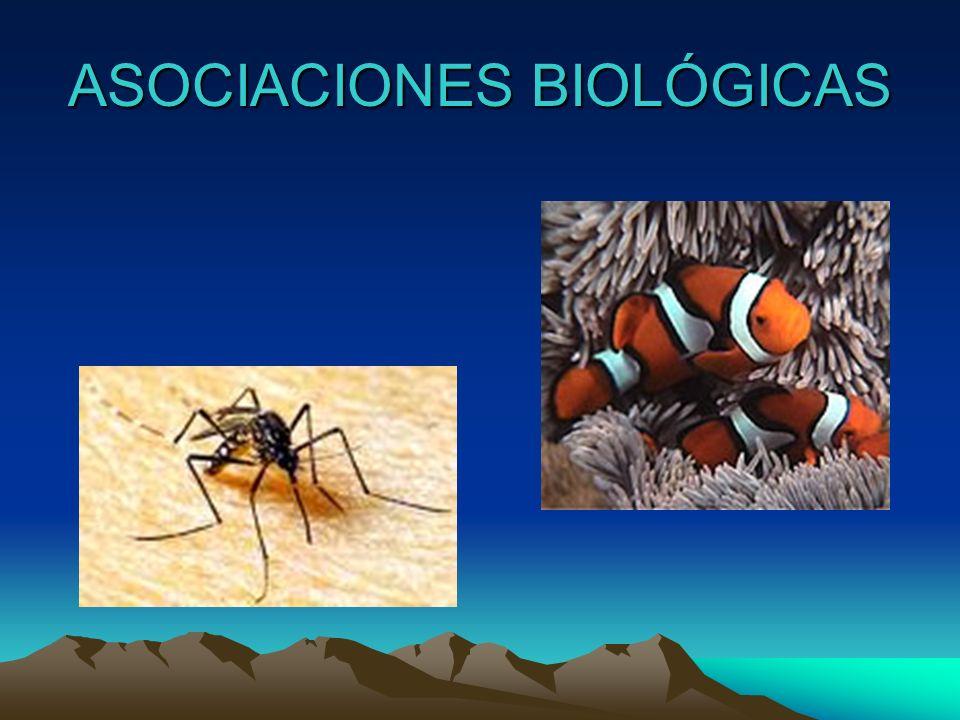asociación entre individuos de la misma especieasociación entre individuos de la misma especie sociedades colonias sociedades colonias asociación entre individuos de especies diferentes: SIMBIOSIS.asociación entre individuos de especies diferentes: SIMBIOSIS.