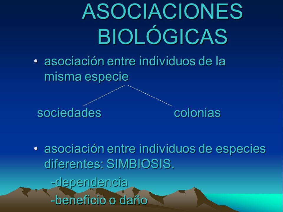 asociación entre individuos de la misma especieasociación entre individuos de la misma especie sociedades colonias sociedades colonias asociación entr