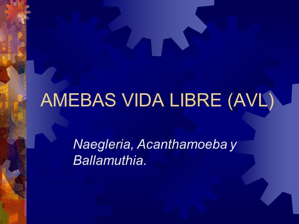 AMEBAS VIDA LIBRE (AVL) Naegleria, Acanthamoeba y Ballamuthia.