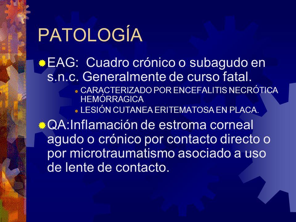 PATOLOGÍA EAG: Cuadro crónico o subagudo en s.n.c. Generalmente de curso fatal. CARACTERIZADO POR ENCEFALITIS NECRÓTICA HEMÓRRAGICA LESIÓN CUTANEA ERI