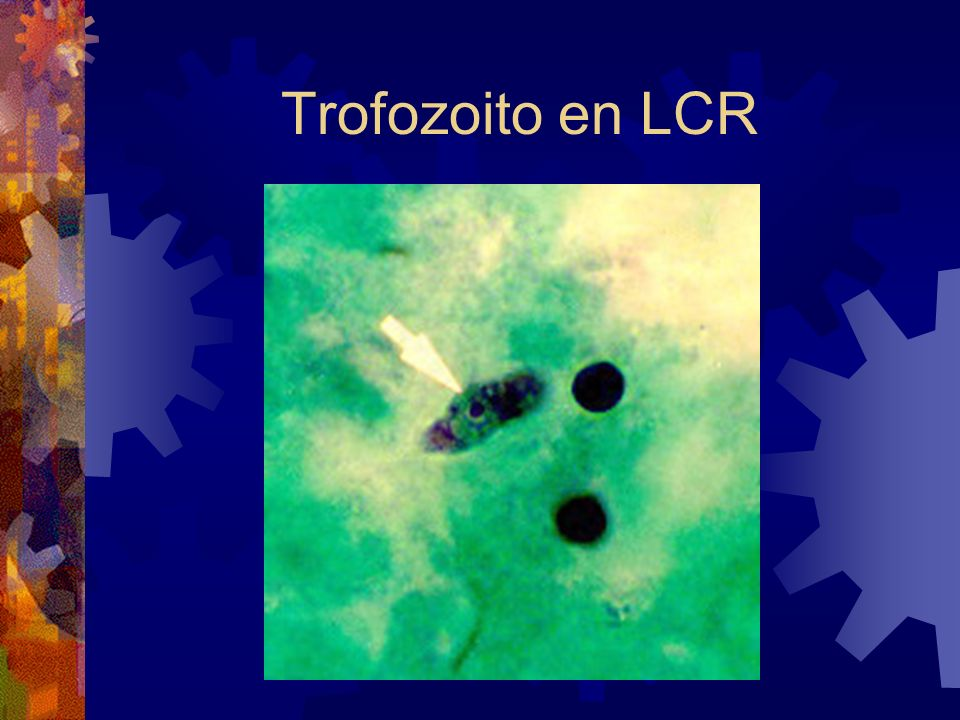 Trofozoito en LCR