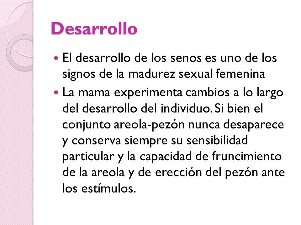 Desarrollo El desarrollo de los senos es uno de los signos de la madurez sexual femenina La mama experimenta cambios a lo largo del desarrollo del ind