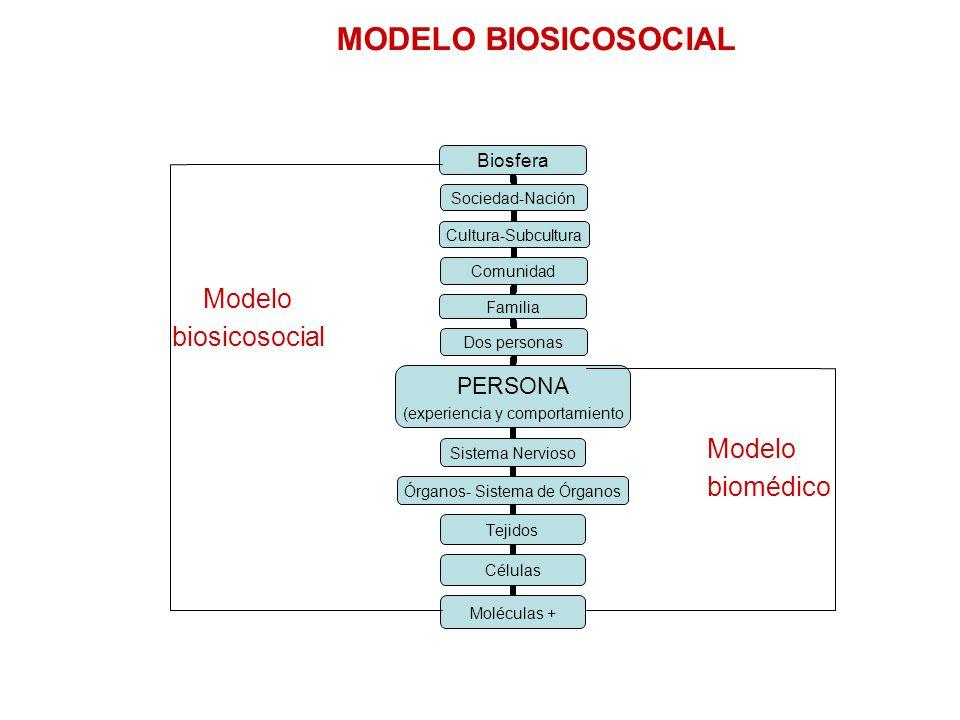 MODELO BIOSICOSOCIAL Biosfera Sociedad-Nación Cultura-Subcultura Comunidad Familia Dos personas PERSONA (experiencia y comportamient o Sistema Nervios