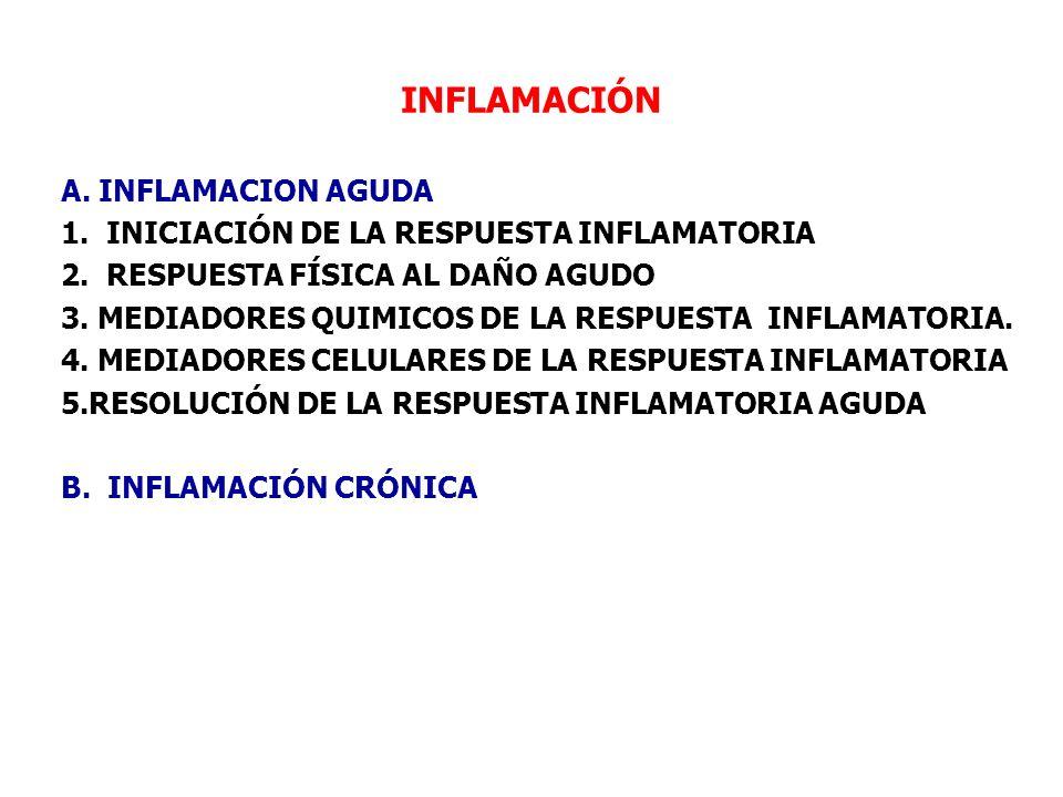 INFLAMACIÓN A. INFLAMACION AGUDA 1. INICIACIÓN DE LA RESPUESTA INFLAMATORIA 2. RESPUESTA FÍSICA AL DAÑO AGUDO 3. MEDIADORES QUIMICOS DE LA RESPUESTA I