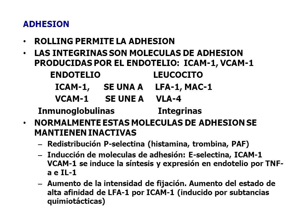ADHESION ROLLING PERMITE LA ADHESION LAS INTEGRINAS SON MOLECULAS DE ADHESION PRODUCIDAS POR EL ENDOTELIO: ICAM-1, VCAM-1 ENDOTELIO LEUCOCITO ICAM-1,