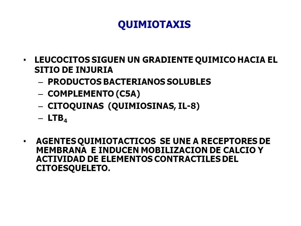 QUIMIOTAXIS LEUCOCITOS SIGUEN UN GRADIENTE QUIMICO HACIA EL SITIO DE INJURIA – PRODUCTOS BACTERIANOS SOLUBLES – COMPLEMENTO (C5A) – CITOQUINAS (QUIMIO