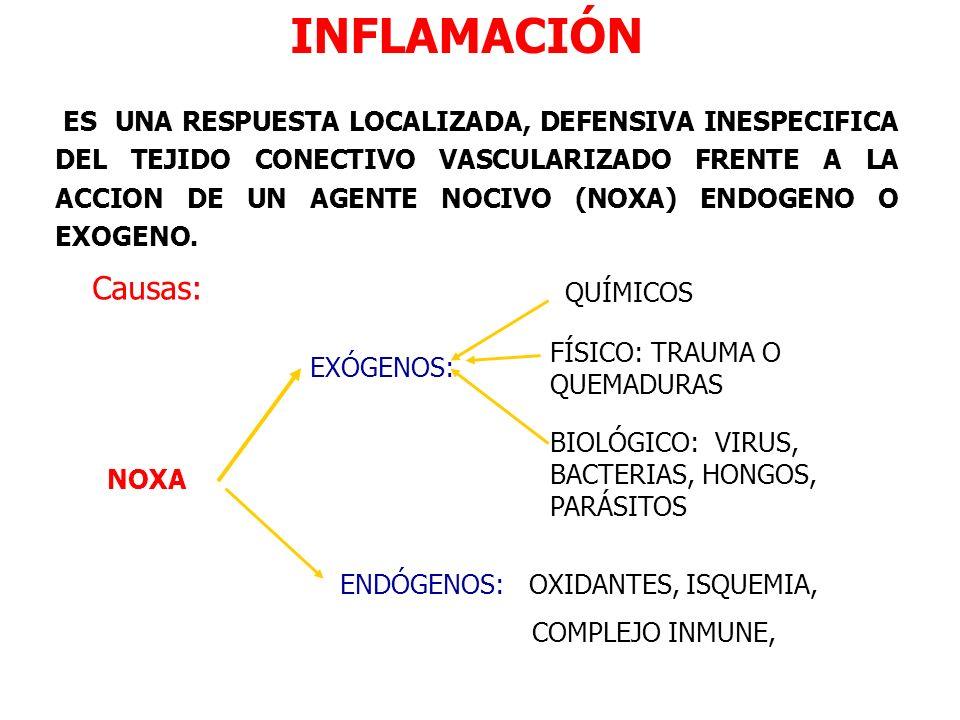 INFLAMACIÓN NOXA EXÓGENOS: FÍSICO: TRAUMA O QUEMADURAS BIOLÓGICO: VIRUS, BACTERIAS, HONGOS, PARÁSITOS QUÍMICOS ENDÓGENOS: OXIDANTES, ISQUEMIA, COMPLEJ