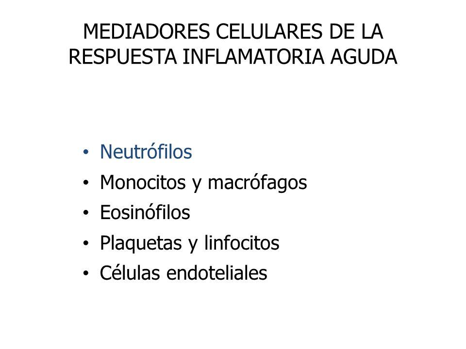 MEDIADORES CELULARES DE LA RESPUESTA INFLAMATORIA AGUDA Neutrófilos Monocitos y macrófagos Eosinófilos Plaquetas y linfocitos Células endoteliales