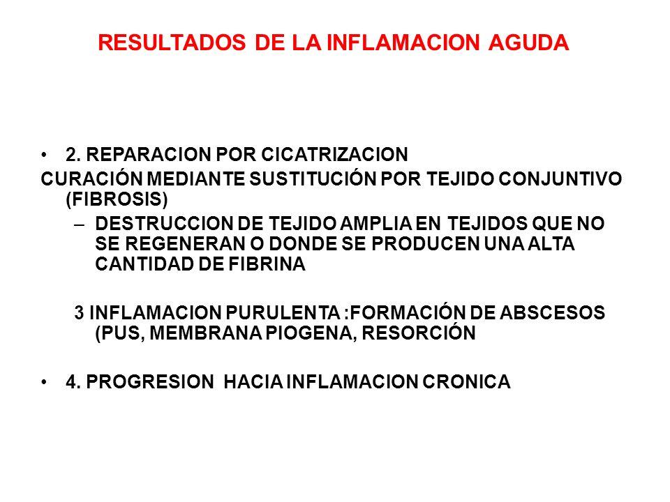 RESULTADOS DE LA INFLAMACION AGUDA 2. REPARACION POR CICATRIZACION CURACIÓN MEDIANTE SUSTITUCIÓN POR TEJIDO CONJUNTIVO (FIBROSIS) –DESTRUCCION DE TEJI
