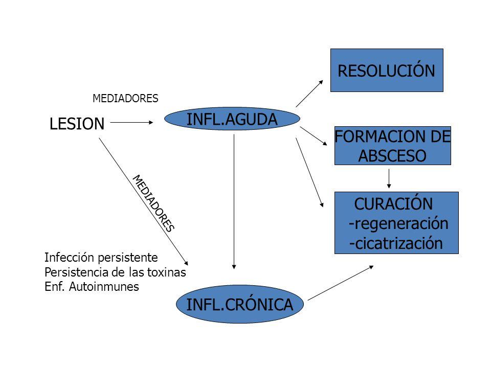 LESION INFL.AGUDA RESOLUCIÓN FORMACION DE ABSCESO CURACIÓN -regeneración -cicatrización INFL.CRÓNICA MEDIADORES Infección persistente Persistencia de