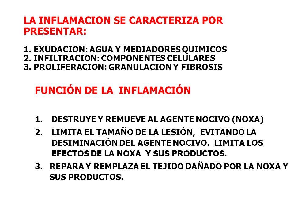 FUNCIÓN DE LA INFLAMACIÓN 1.DESTRUYE Y REMUEVE AL AGENTE NOCIVO (NOXA) 2.LIMITA EL TAMAÑO DE LA LESIÓN, EVITANDO LA DESIMINACIÓN DEL AGENTE NOCIVO. LI