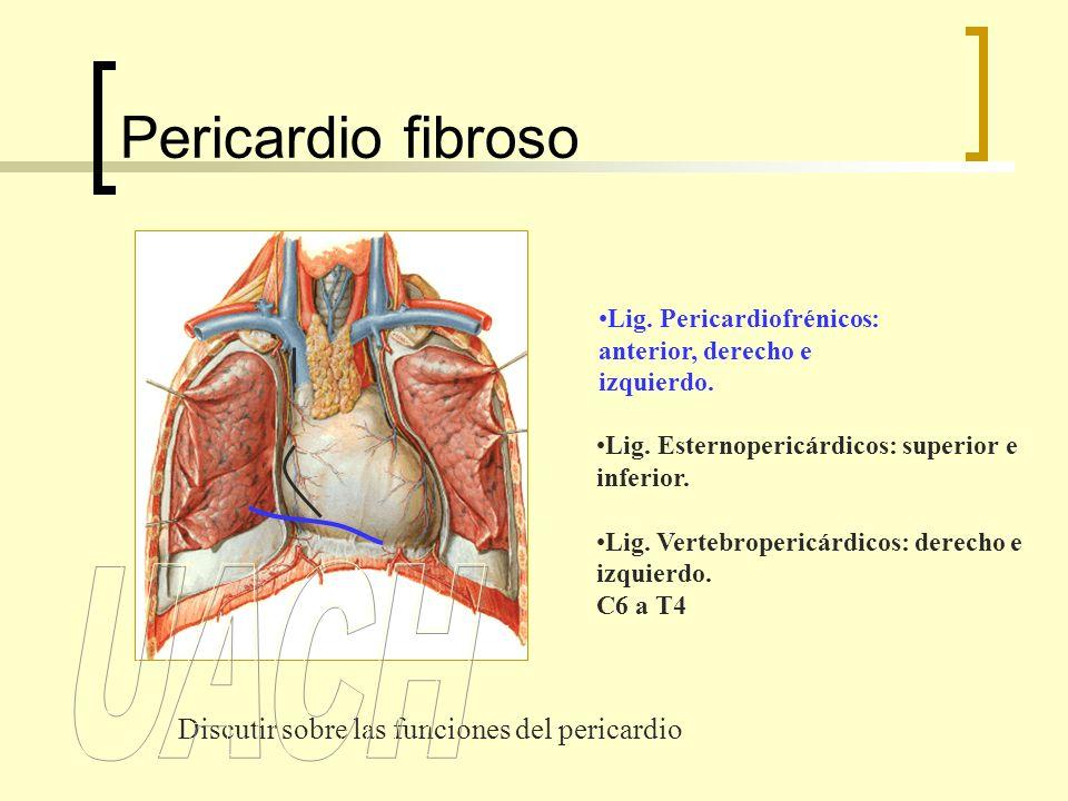 Pericardio fibroso Lig.Pericardiofrénicos: anterior, derecho e izquierdo.