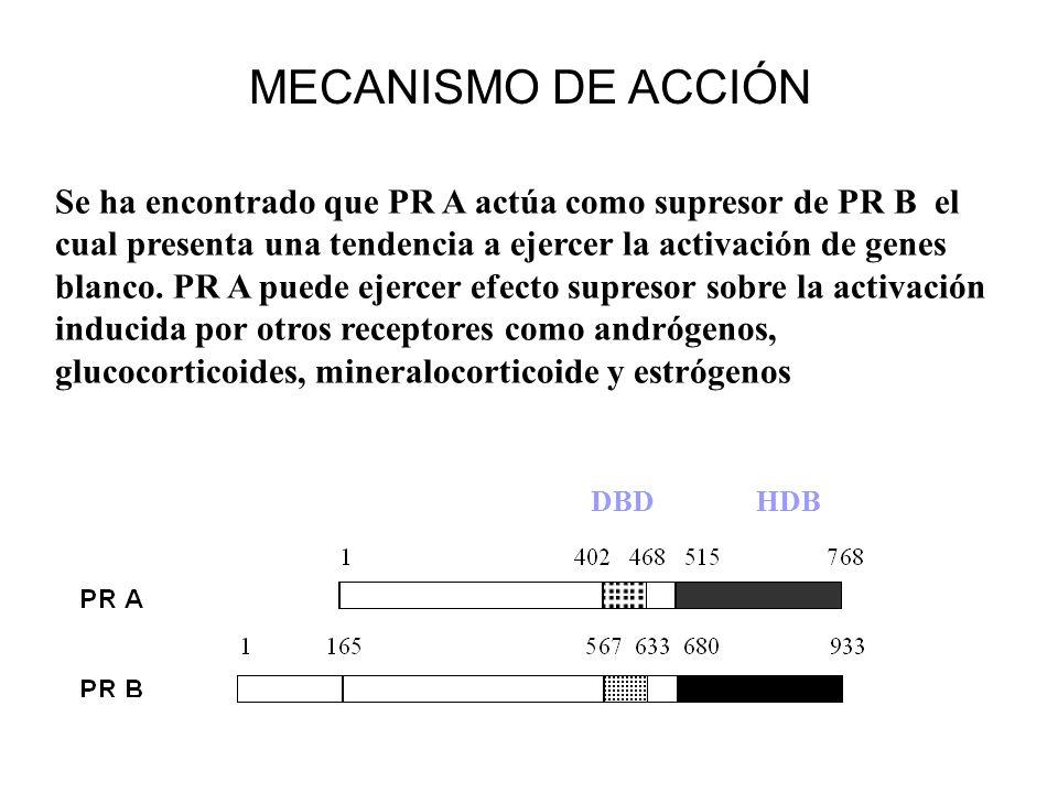 Se ha encontrado que PR A actúa como supresor de PR B el cual presenta una tendencia a ejercer la activación de genes blanco. PR A puede ejercer efect