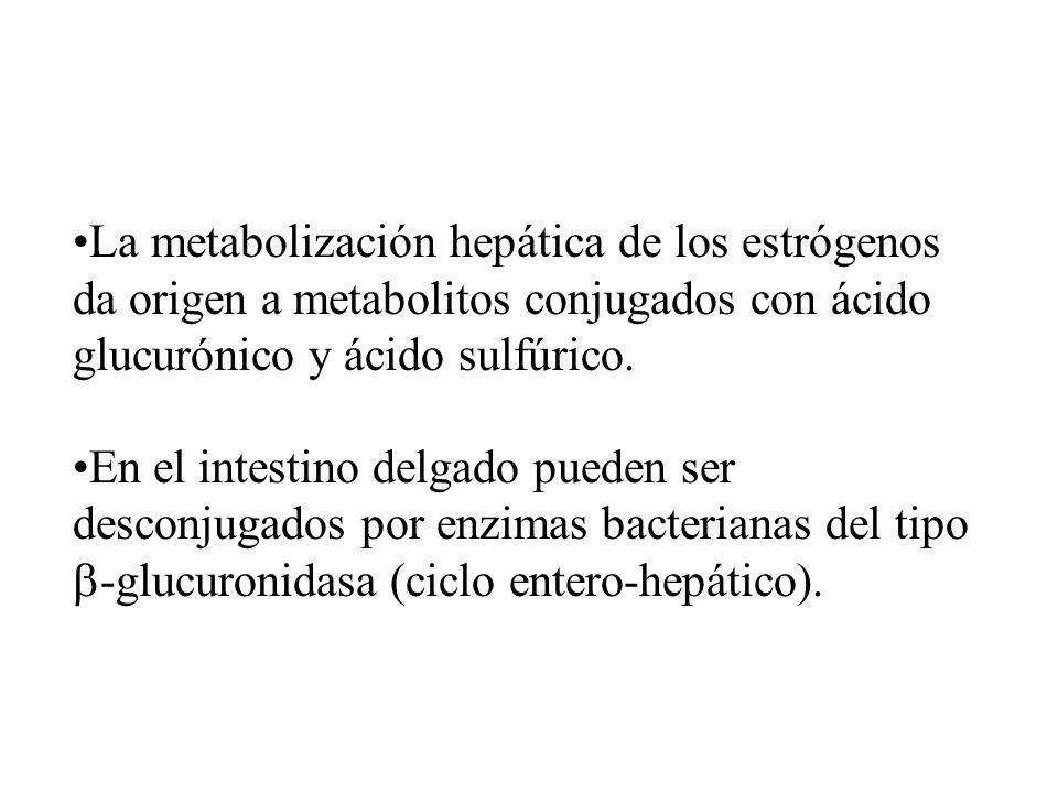 La metabolización hepática de los estrógenos da origen a metabolitos conjugados con ácido glucurónico y ácido sulfúrico. En el intestino delgado puede