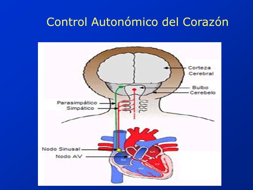 Control de la FCF por Quimioreceptores y Baroreceptores Quimioreceptores : Representados por los cuerpos aórticos y carotídeos.