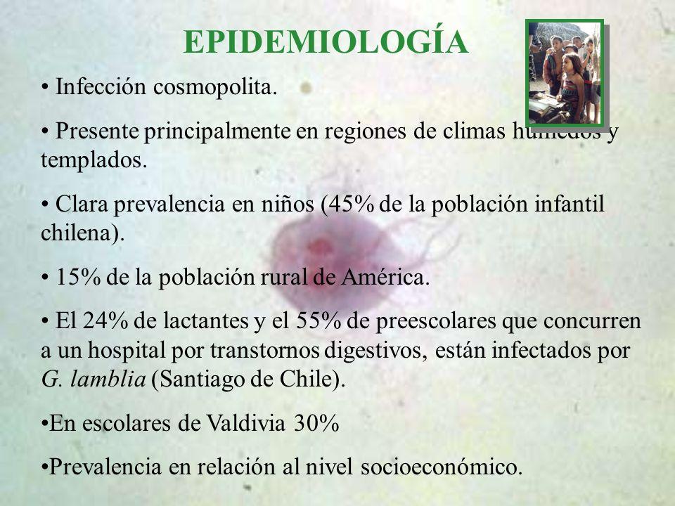 EPIDEMIOLOGÍA Infección cosmopolita. Presente principalmente en regiones de climas húmedos y templados. Clara prevalencia en niños (45% de la població