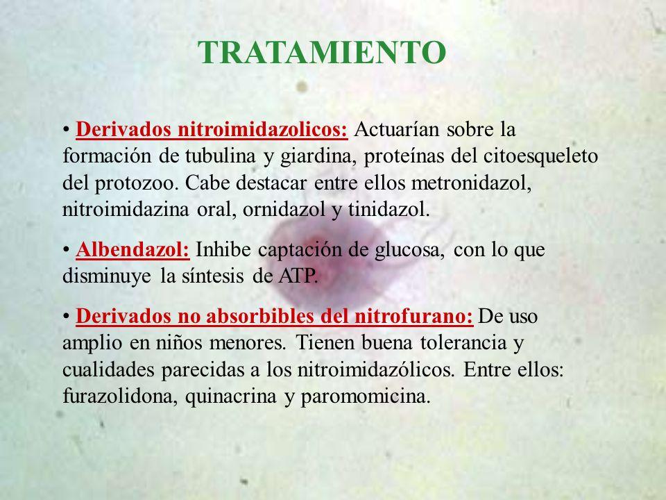 TRATAMIENTO Derivados nitroimidazolicos: Actuarían sobre la formación de tubulina y giardina, proteínas del citoesqueleto del protozoo. Cabe destacar