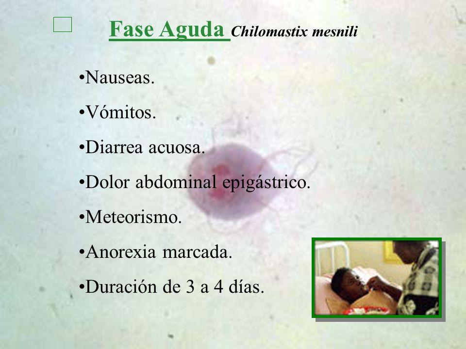 Fase Aguda Chilomastix mesnili Nauseas. Vómitos. Diarrea acuosa. Dolor abdominal epigástrico. Meteorismo. Anorexia marcada. Duración de 3 a 4 días.