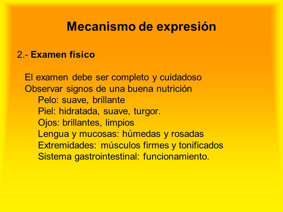 Mecanismo de expresión 2.- Examen físico El examen debe ser completo y cuidadoso Observar signos de una buena nutrición Pelo: suave, brillante Piel: h