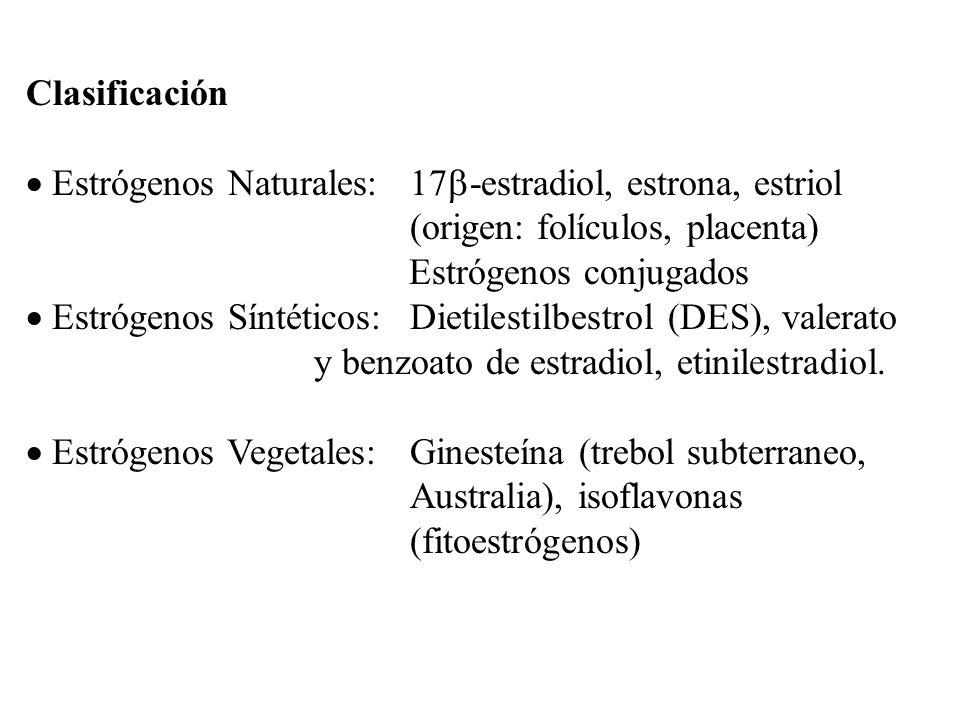 Clasificación Estrógenos Naturales: 17 -estradiol, estrona, estriol (origen: folículos, placenta) Estrógenos conjugados Estrógenos Síntéticos:Dietiles