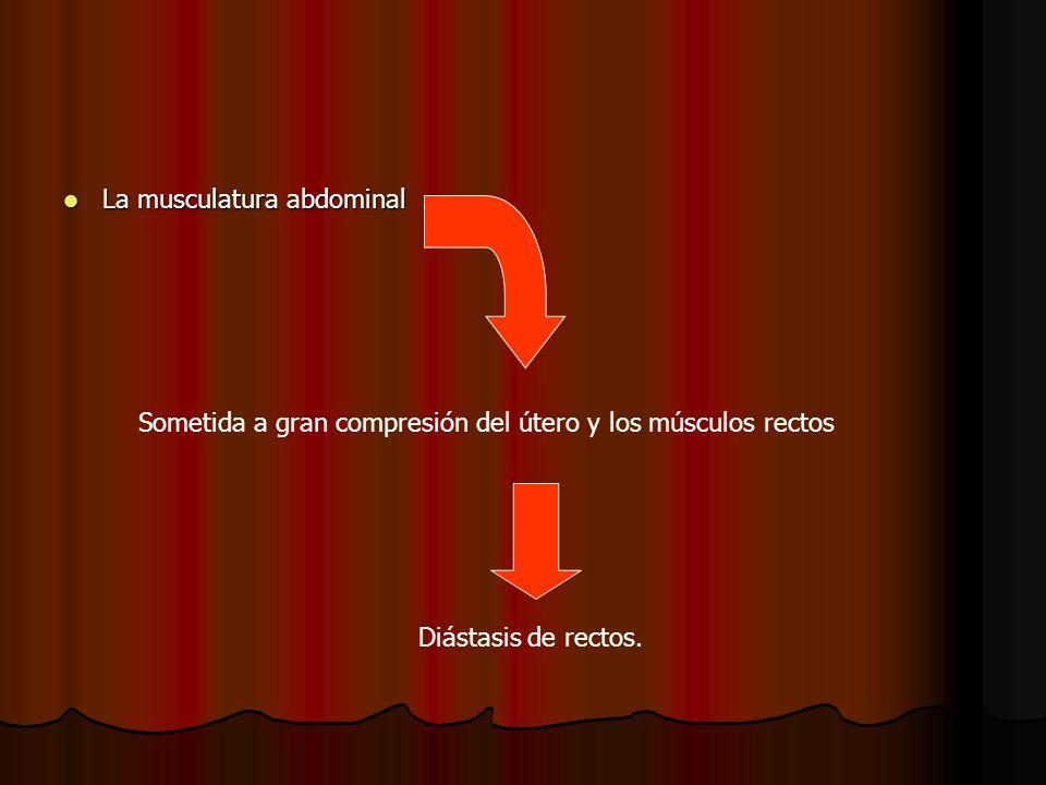 La musculatura abdominal La musculatura abdominal Sometida a gran compresión del útero y los músculos rectos Diástasis de rectos.